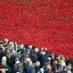 Last weekend to see the Tower of London poppies