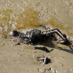 Mystery skeleton-like object spotted in the Thames at Gravesend