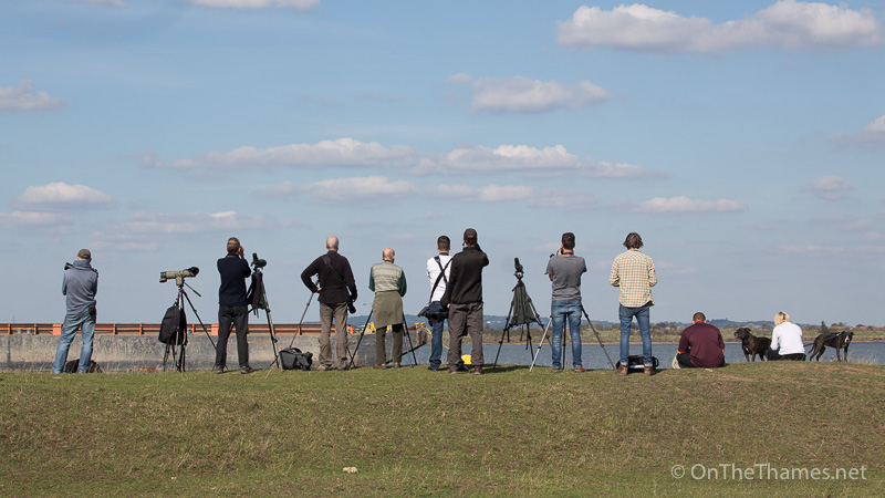 People from as far as North London and Hertfordshire gathered on the foreshore close to Shorne in Kent to see the white whale